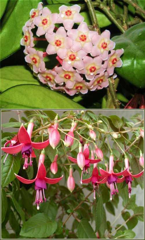 Как стимулировать цветение комнатных растений